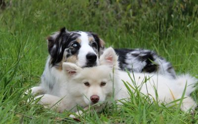 Is Fostering a Pet Right for Your Family?